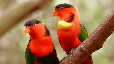 Tropical Birds