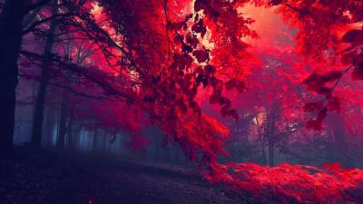 Blood Red Forest