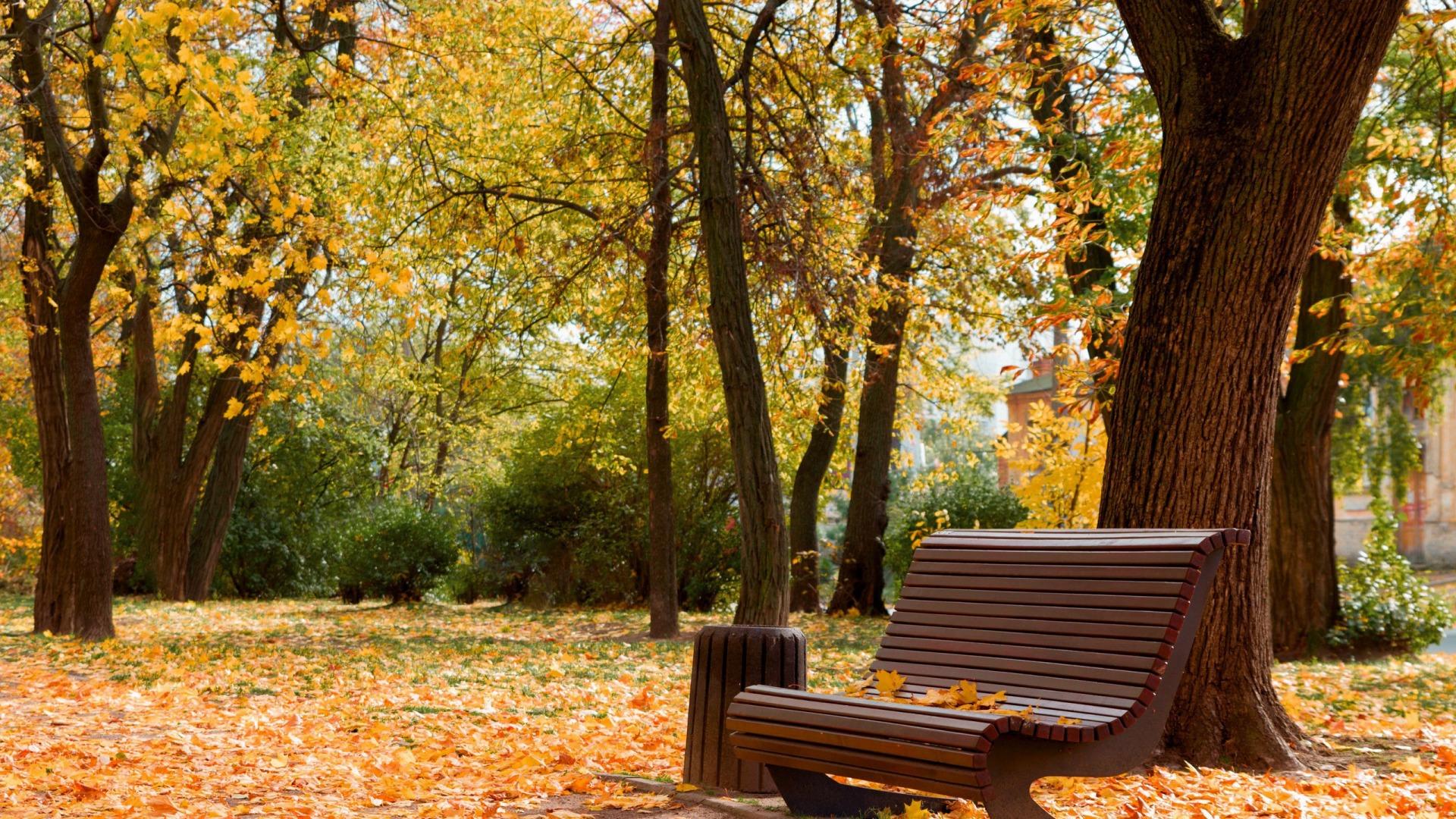 осень в парке, Черкассы, красота (1920x1080) - Обои - Природа