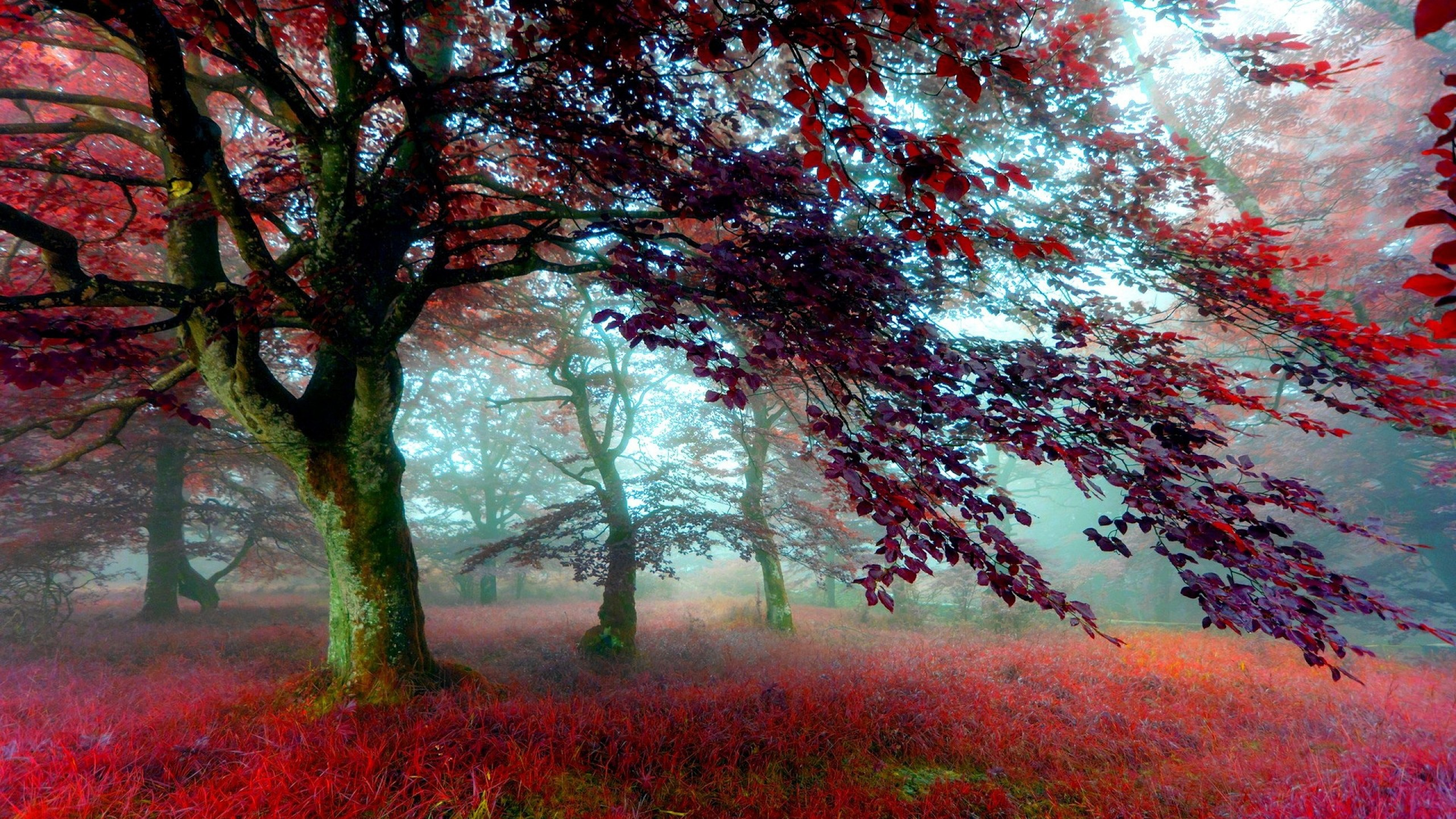 Red Effect Autumn Forest