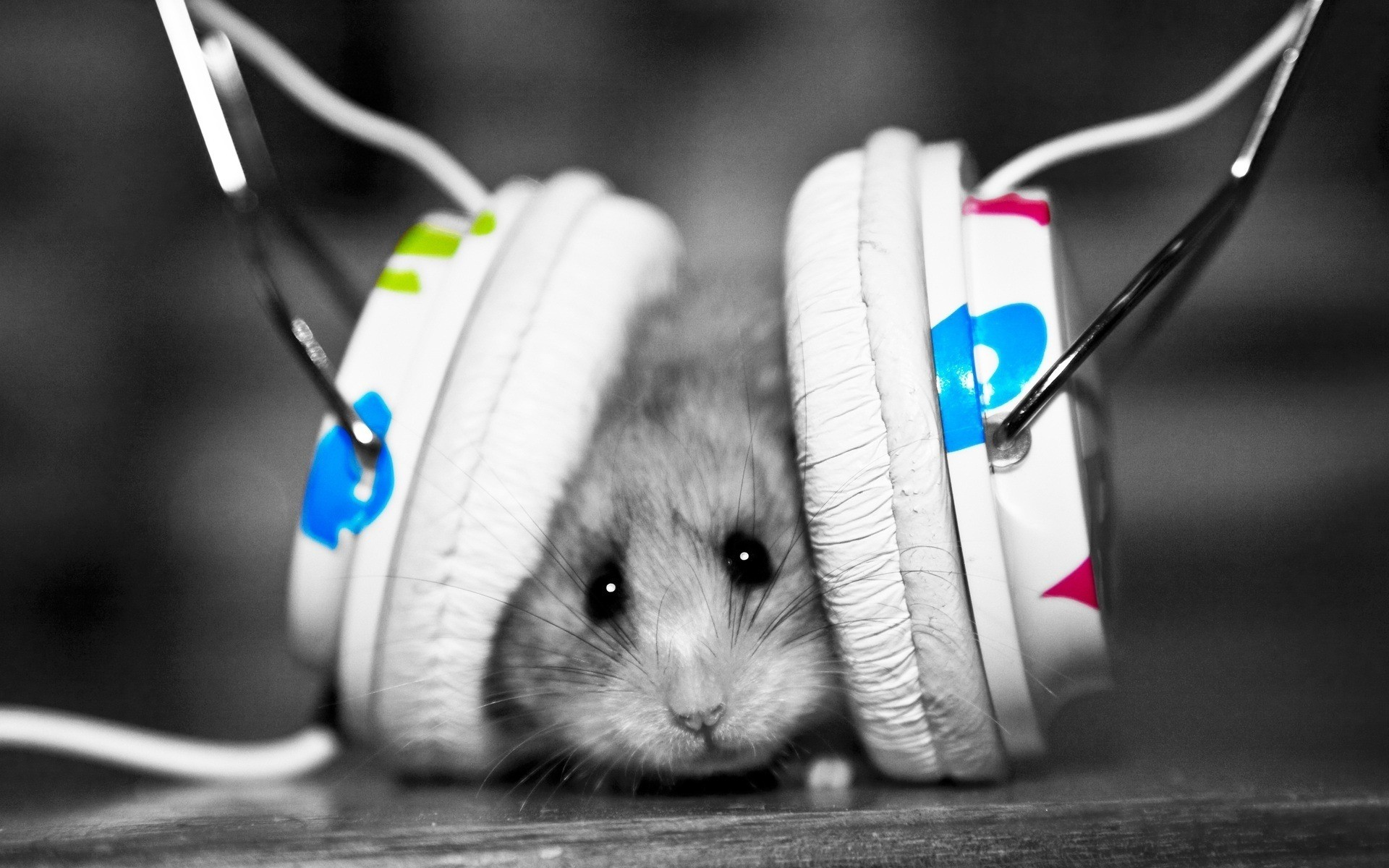 Mouse with headphone