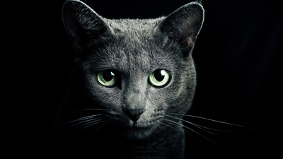 look, fur, darkness, Green eyes