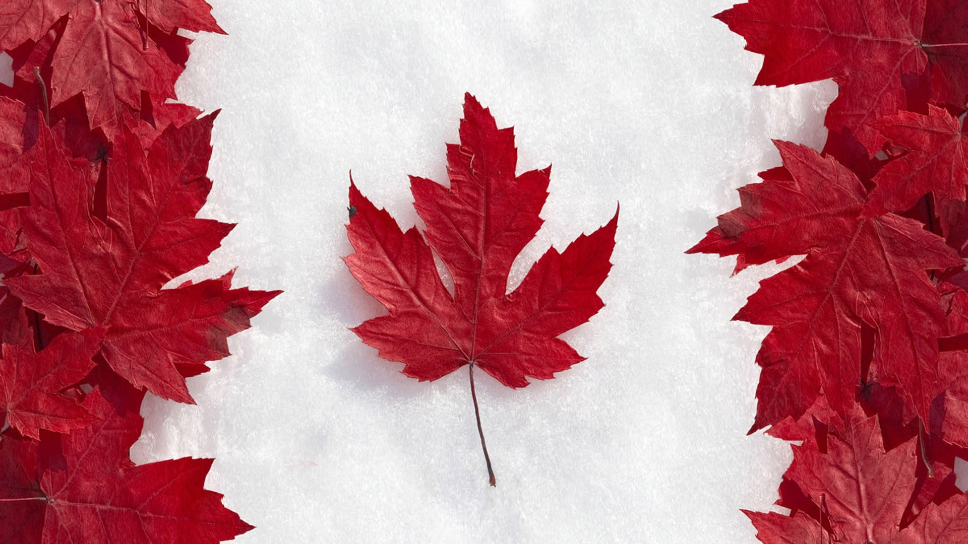 Canada Flag Maple Leaf Art