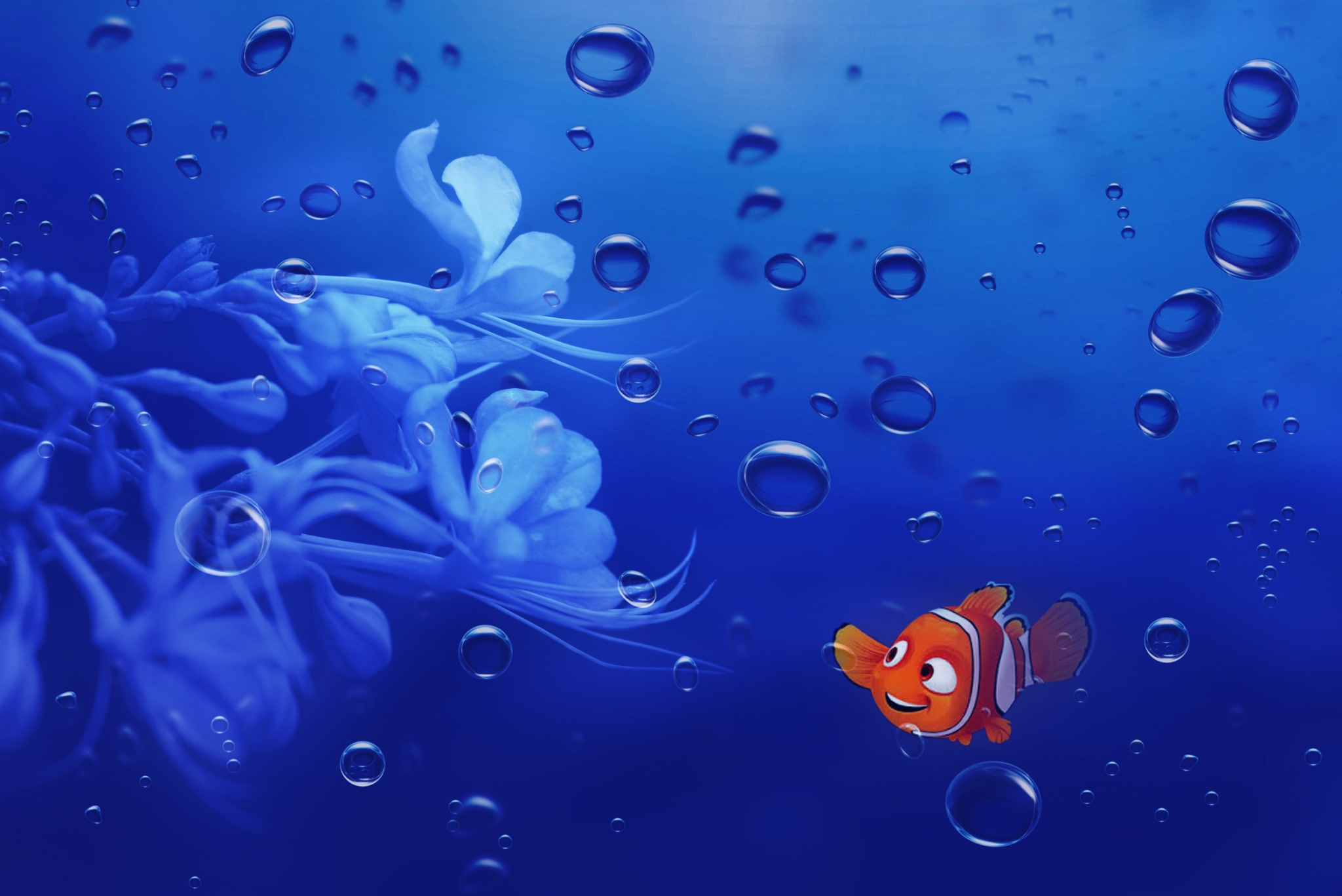 Pictures of nemo