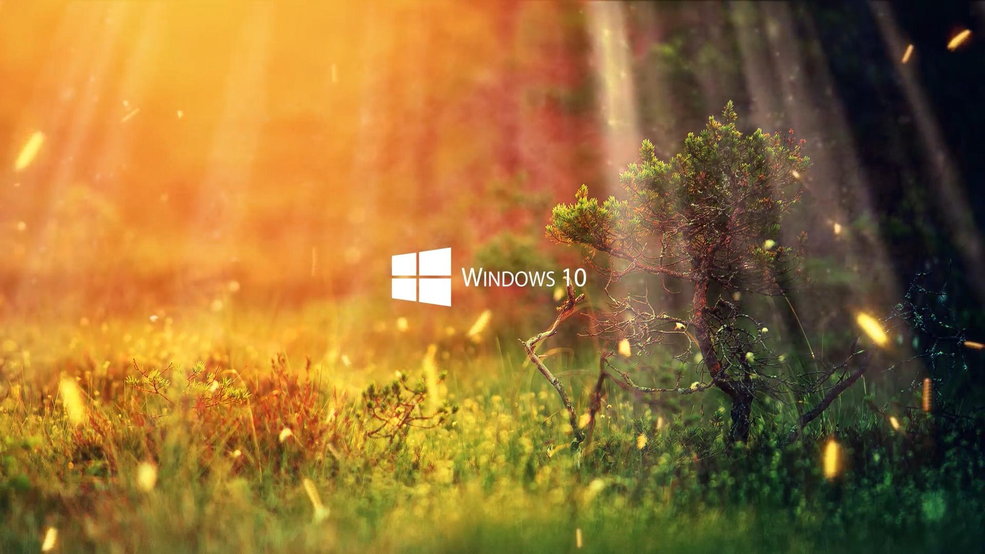 Анимационные Обои Для Рабочего Стола Windows 10