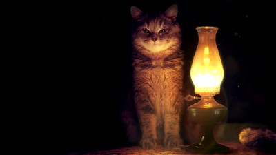 Lamp and Cat